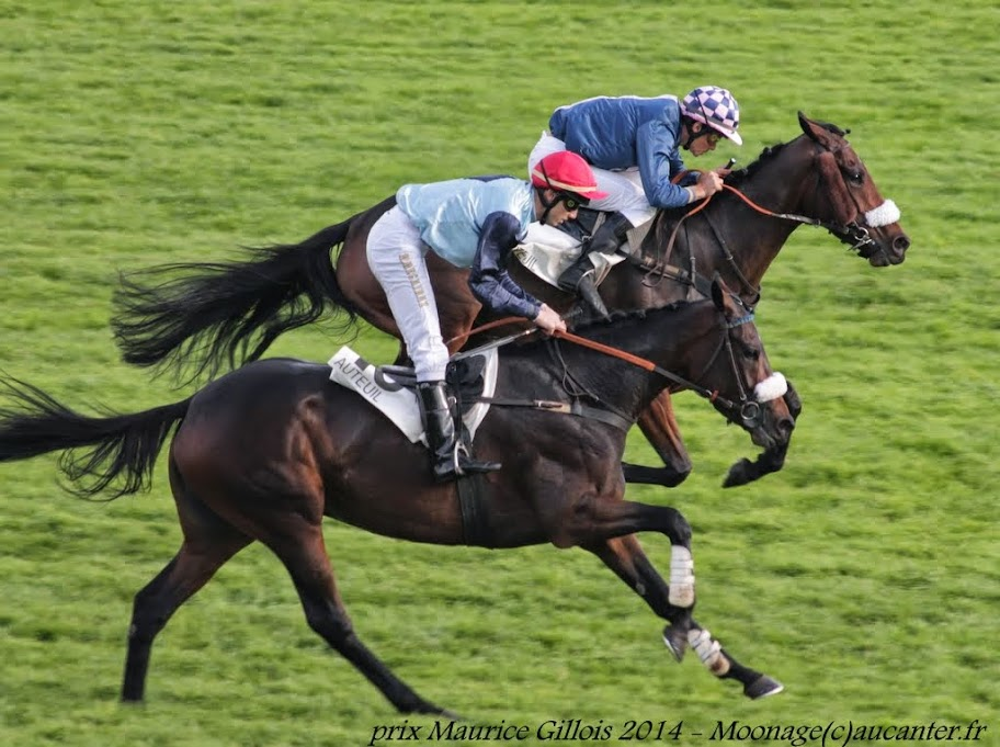 Photos Auteuil 2-11-2014 (48h de l'obstacle) IMG_5491