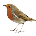 Mooie vogelnamen