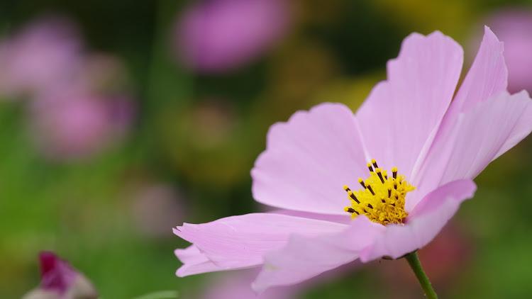台北花卉展3