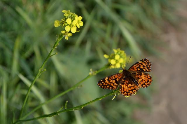 orange alighting on yellow