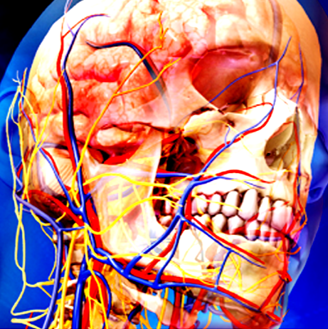 Gray\'s Anatomy - Atlas – Apps bei Google Play