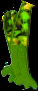 FrogLeftLeg