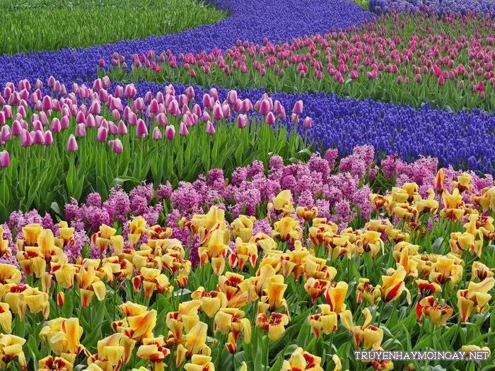 Những hình ảnh đẹp về hoa cho bạn ngắm mãi không biết chán P3