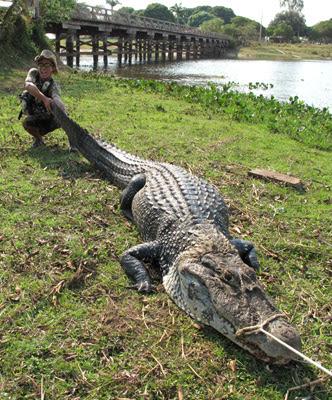 Questões e Fatos sobre Crocodilianos gigantes: Transferência de debate da comunidade Conflitos Selvagens.  - Página 3 Middle_1254697472