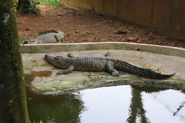Taman-Buaya-dan-Rekreasi-Melaka-Crocodile-Park