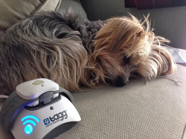 Barkzilla: A Savvy NYC Dog Blog: 2013