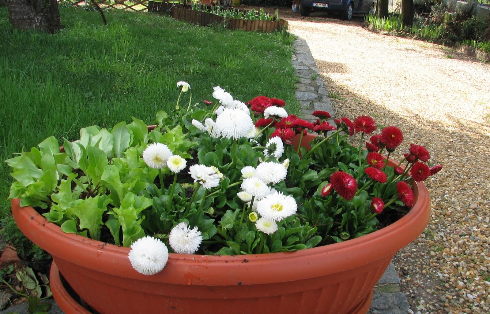 L 39 orto dei colori marzo 2011 for Dalie giganti
