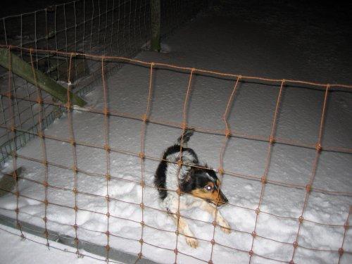 Deze hond heeft nog geen kou.