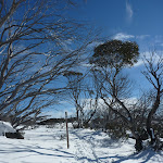 Leading among the Snowgums (299938)