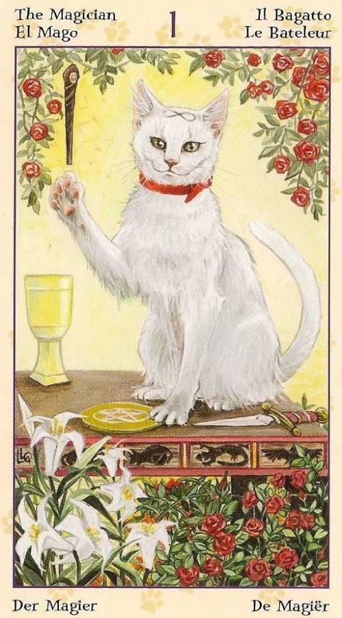 Tarot Notes A Journey Through My Tarot Decks The Magician: Tarot Notes: Interview With Tarot Of Pagan Cats (by Zanna
