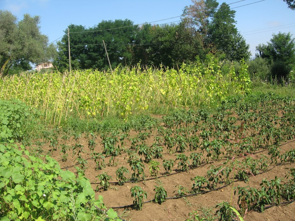 A small plot of land cultivated on the Latella farm in Calabria