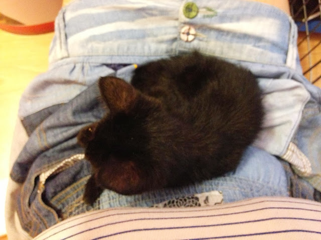 Yoko, la gata rescatada de la alcantarilla IMG_3928