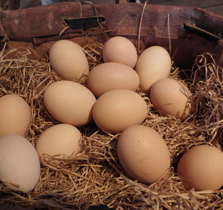 the barnswallow: Oh, the egg
