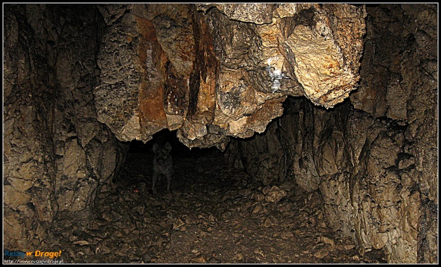 hiena jaskiniowa