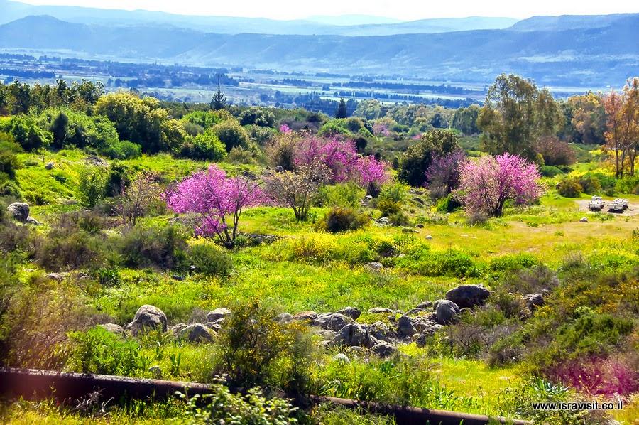 Пейзаж Верхней Галилеи. Экскурсия в Верхней Галилеи, Израиль.