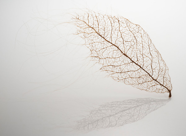 leaves 3 Awesome Tree Leaves Made Of Stitched And Knotted Human Hair By Jenine Shereos [PICS]