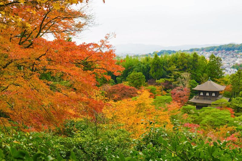 京都 銀閣寺 紅葉 写真6