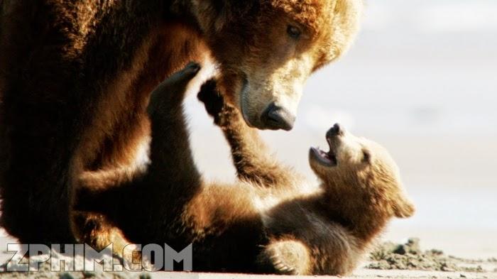 Ảnh trong phim Những Chú Gấu - Bears 1