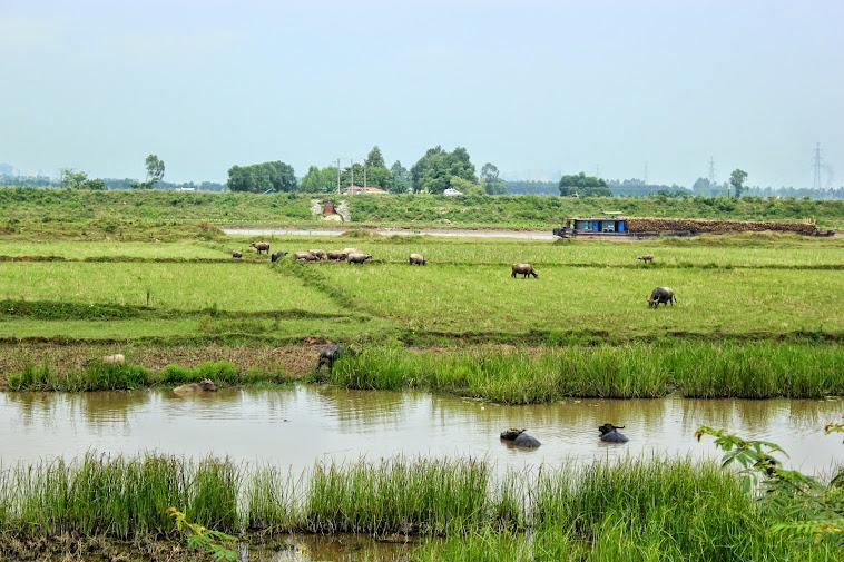 ויטנאם - הואה לו ונין בין