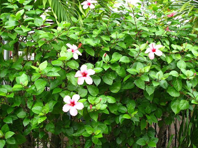 Из зимы в лето. Филиппины 2011 IMG_0008