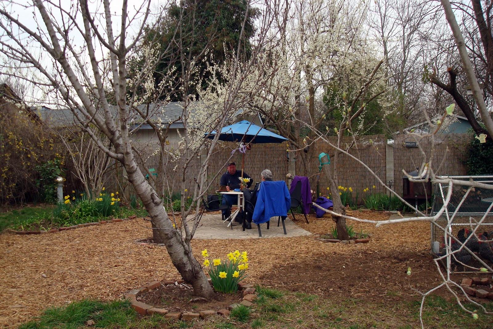 Amberglen Farm: Garden Snapshot: Early March