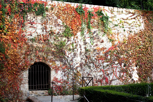 Ivy-covered wall