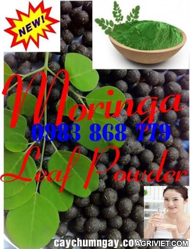 Agriviet.Com-moringa_powder_sdfsdf.jpg