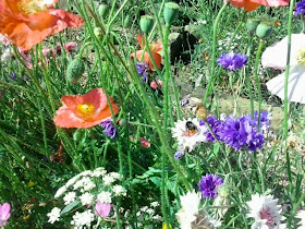 Bee busy on a flower in a multicolor wolds flowerbed
