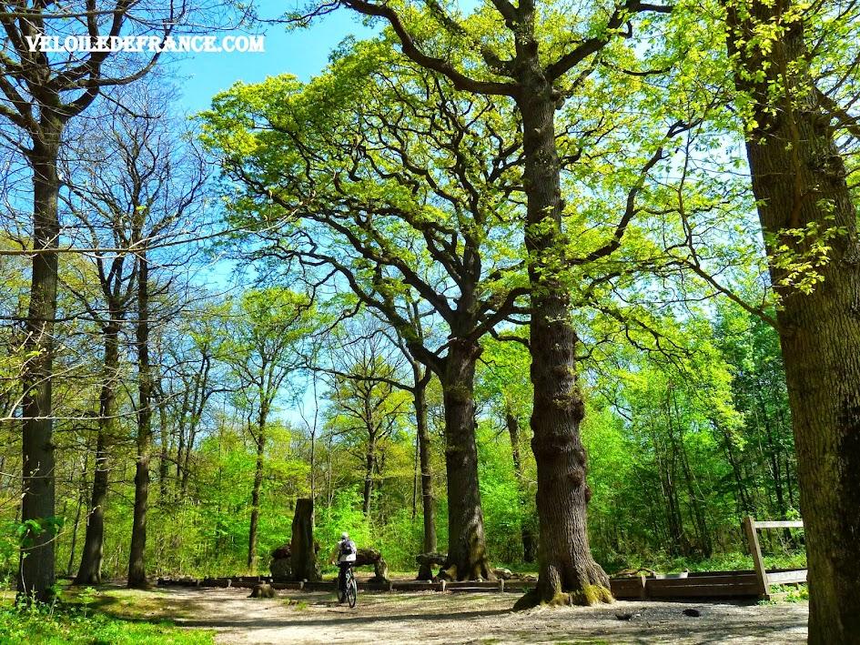 Chêne des Missions, le plus vieux chêne de la Forêt de Meudon - e-guide balade à vélo de Meudon au Château de Versailles par veloiledefrance.com