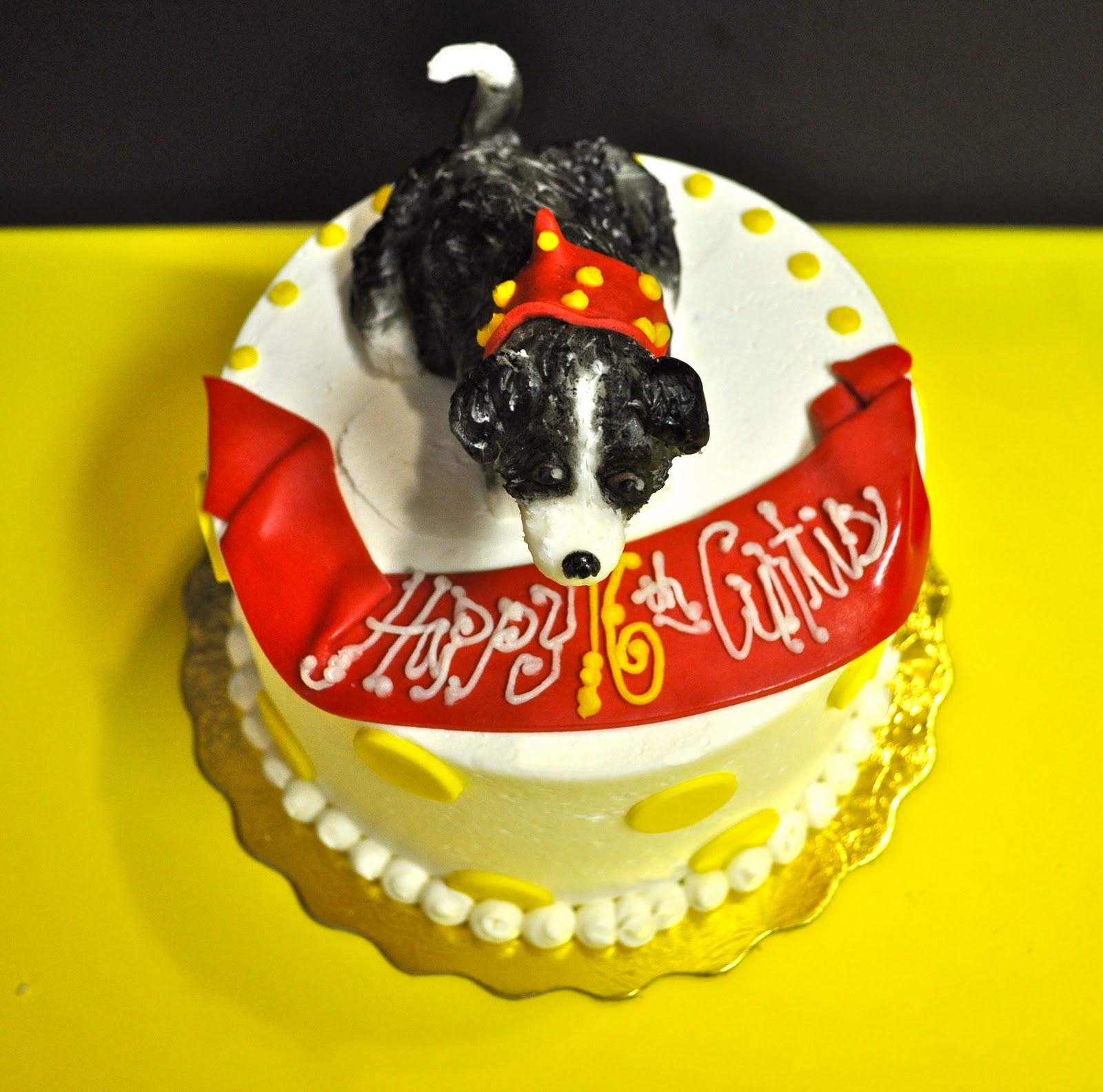 border collie cake