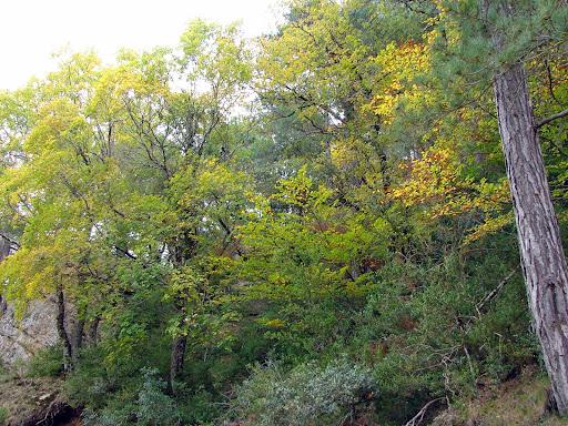 Senderismo: Area de la Fou - Cirers - Fagueda del Retaule - Mirandes - Cova Pusa