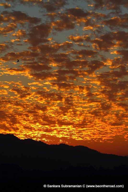 Vivid and Vibrant Evening Sky at Kaziranga - 2