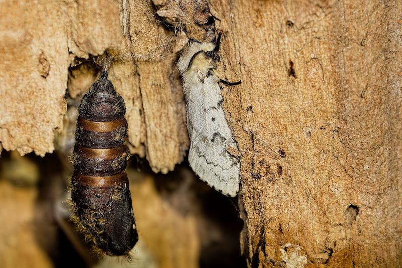 Moths - hehe