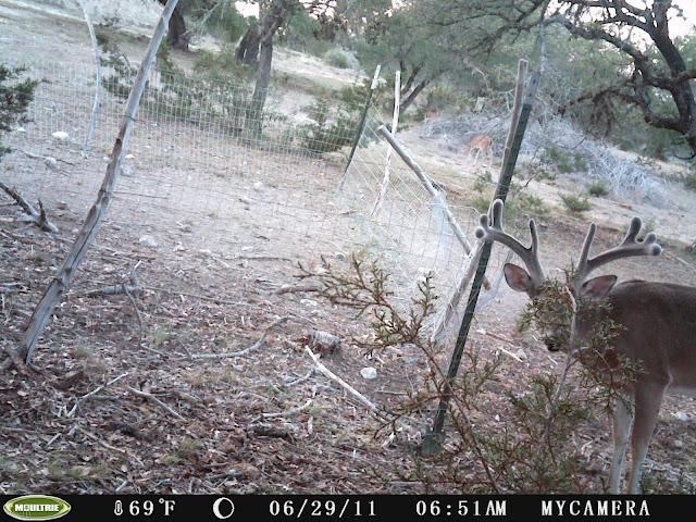 Deer_Camera_452.jpg