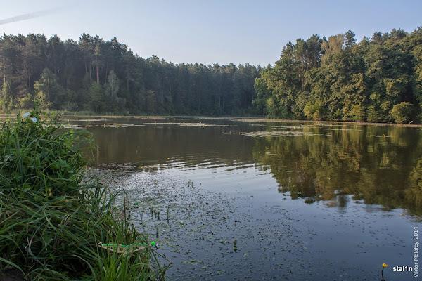 Фото водойма в решуцькому лісі