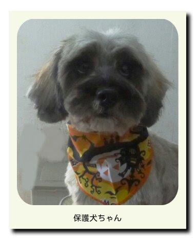 MIXの保護犬ちゃん