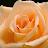 Michelle Hawkins avatar image