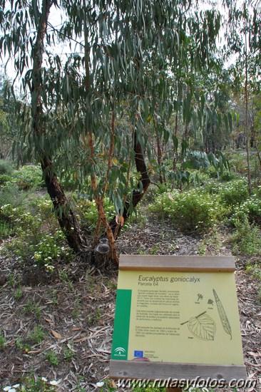Arboreto de El Villar