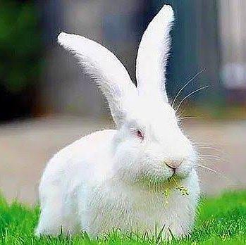 Murat Barlas