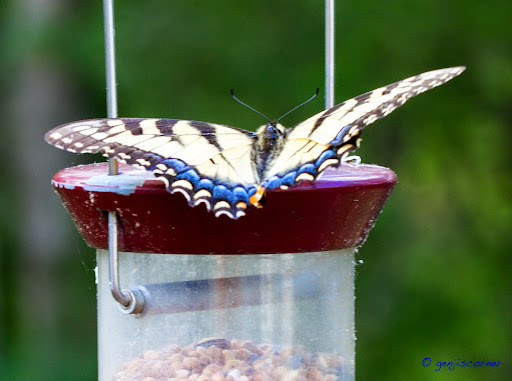 Butterfly-2014-06-8-21-13.jpg