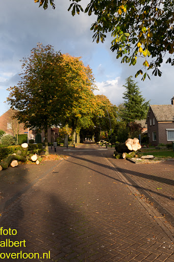 Bomen gekapt Museumlaan in overloon 20-10-2014 (41).jpg