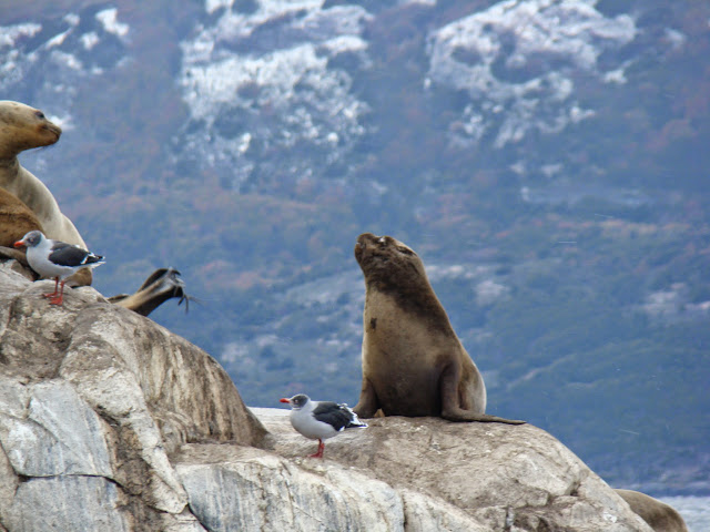 Lobo marino, Canal de Beagle, Ushuaia, Argentina, Elisa N, Blog de Viajes, Lifestyle, Travel