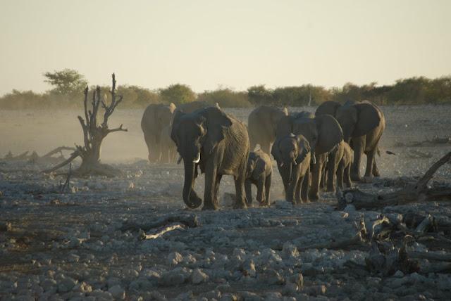 أفضل ما في أفريقيا  Best of Africa Namibia_180807172012