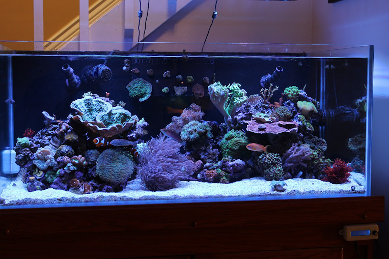 Rimless aquarium club page 55 reef central online for Rimless fish tank