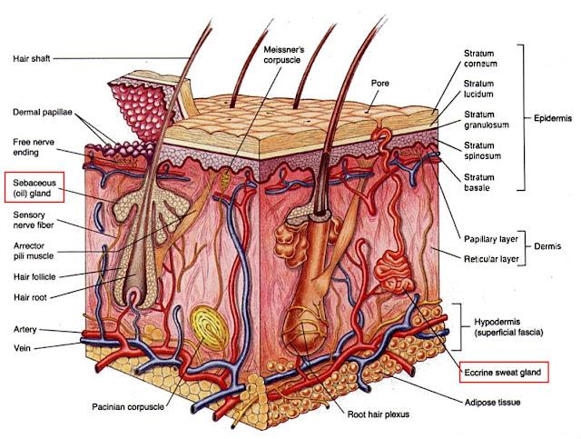 Cara merawat kulit berminyak dan berjerawat