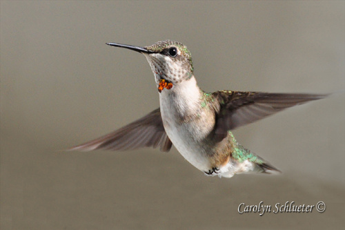 """""""Bow Tie"""" by photographer Carolyn Schlueter."""