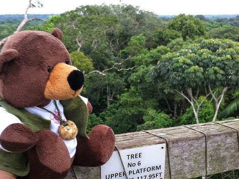 Tiny Bear Explores Big Questions in the Amazon! Explored the rainforest canopy