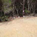 Bushtrack to Bournda Beach (106999)