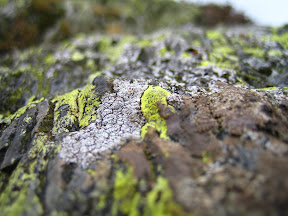 A dark grey rock covered with bright green lichen