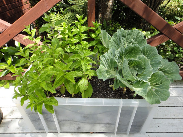 Hot Girls Cooking recommends: Urban Gardening, growing you salads and herbs in convenient containers.
